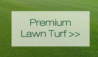 home-page-turf-box-1